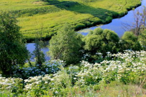 Река Протва. Борисово
