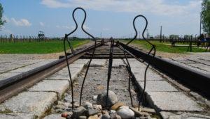 Освенцим 8