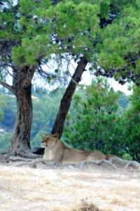 Reserve Africane de Sigean 1